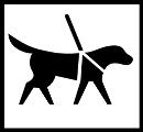 Opaskoira. Kuvassa on koira, jolla on opaskoiran valjaat. Valkoinen tausta.