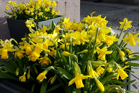 Picture: Spring flowers at the city hall